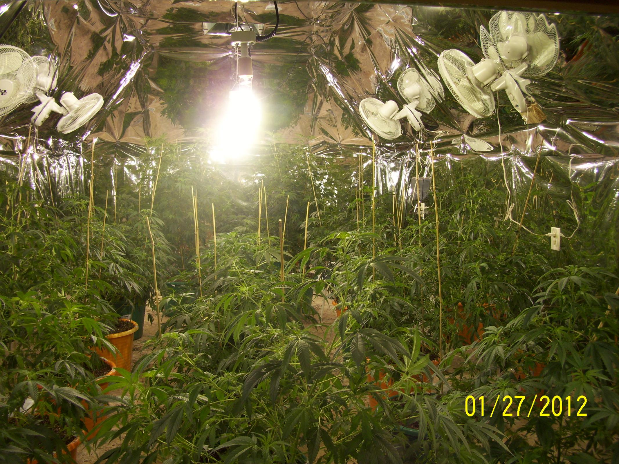 10x10 grow room help | Grasscity Forums - The #1 Marijuana