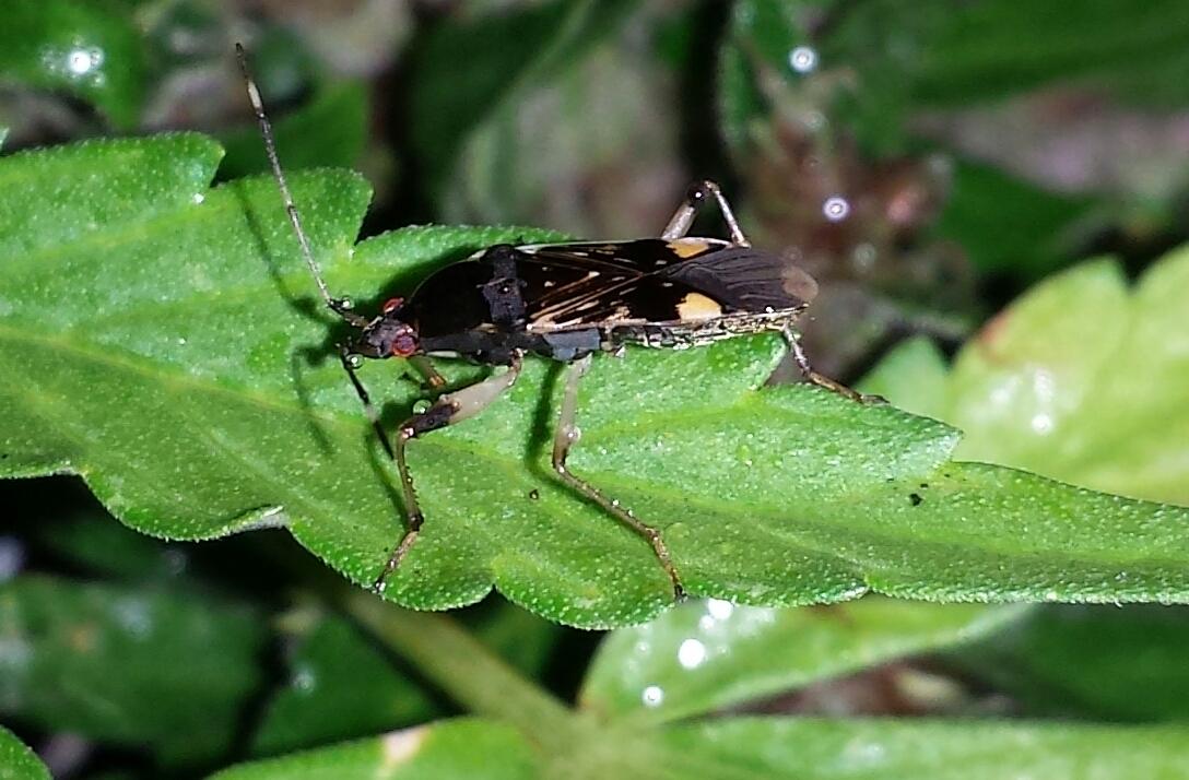 Insect identification? | Grasscity Forums - The #1 Marijuana