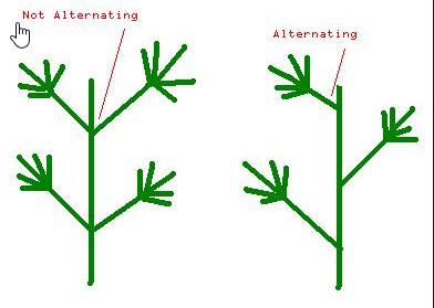 Alternating nodes.jpg