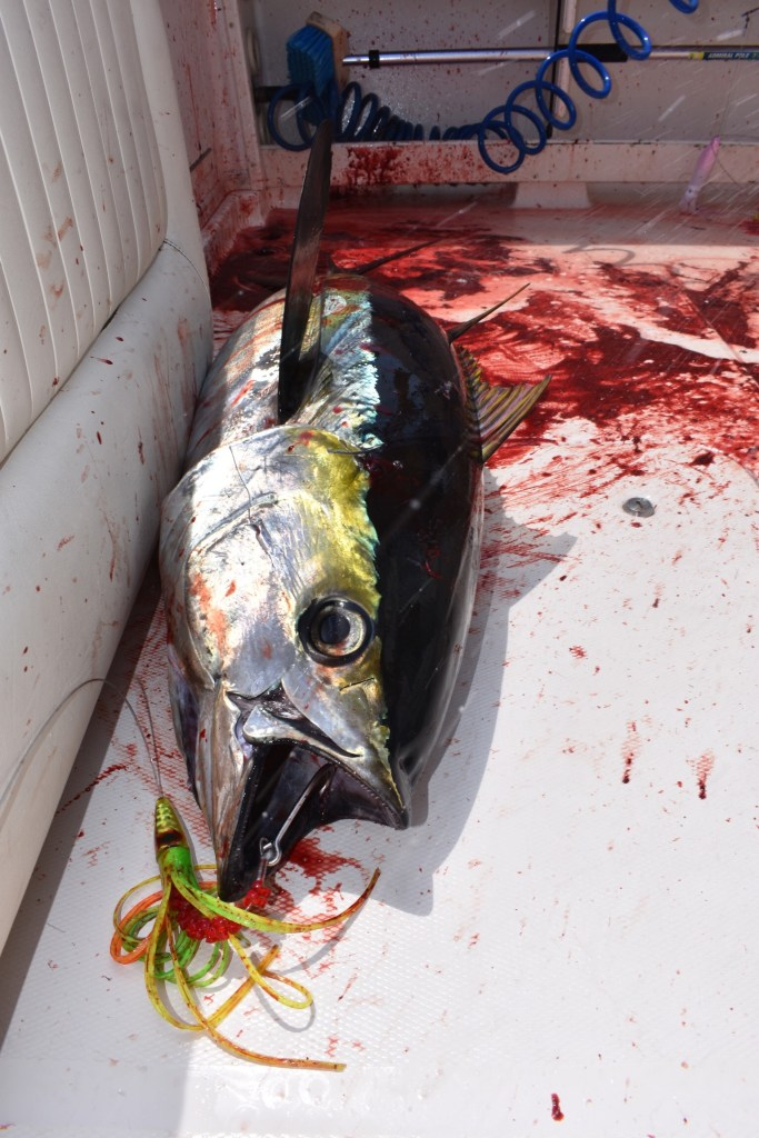 bloody-tuna.jpg