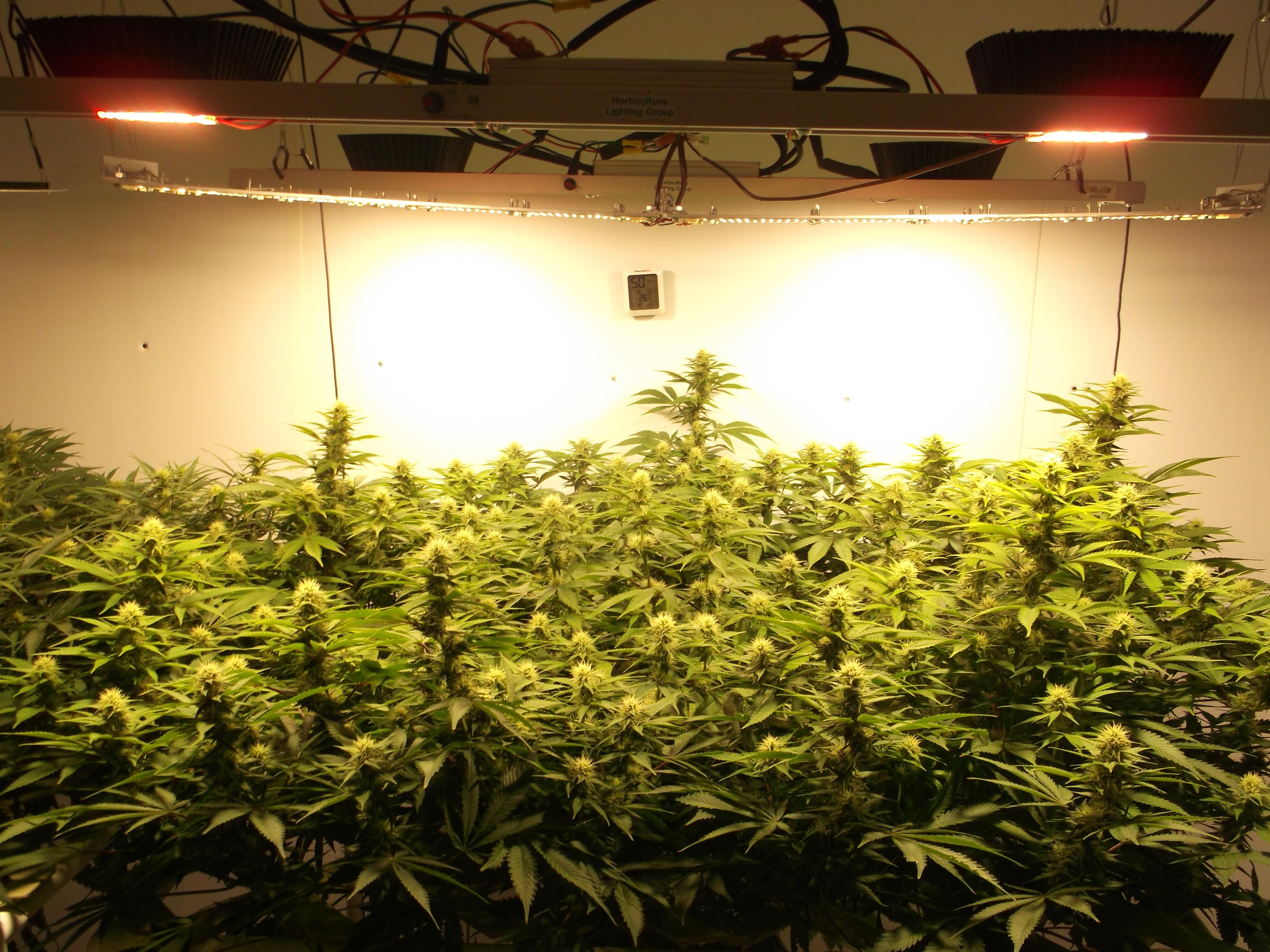 COB vs Quantum Board | Grasscity Forums - The #1 Marijuana Community