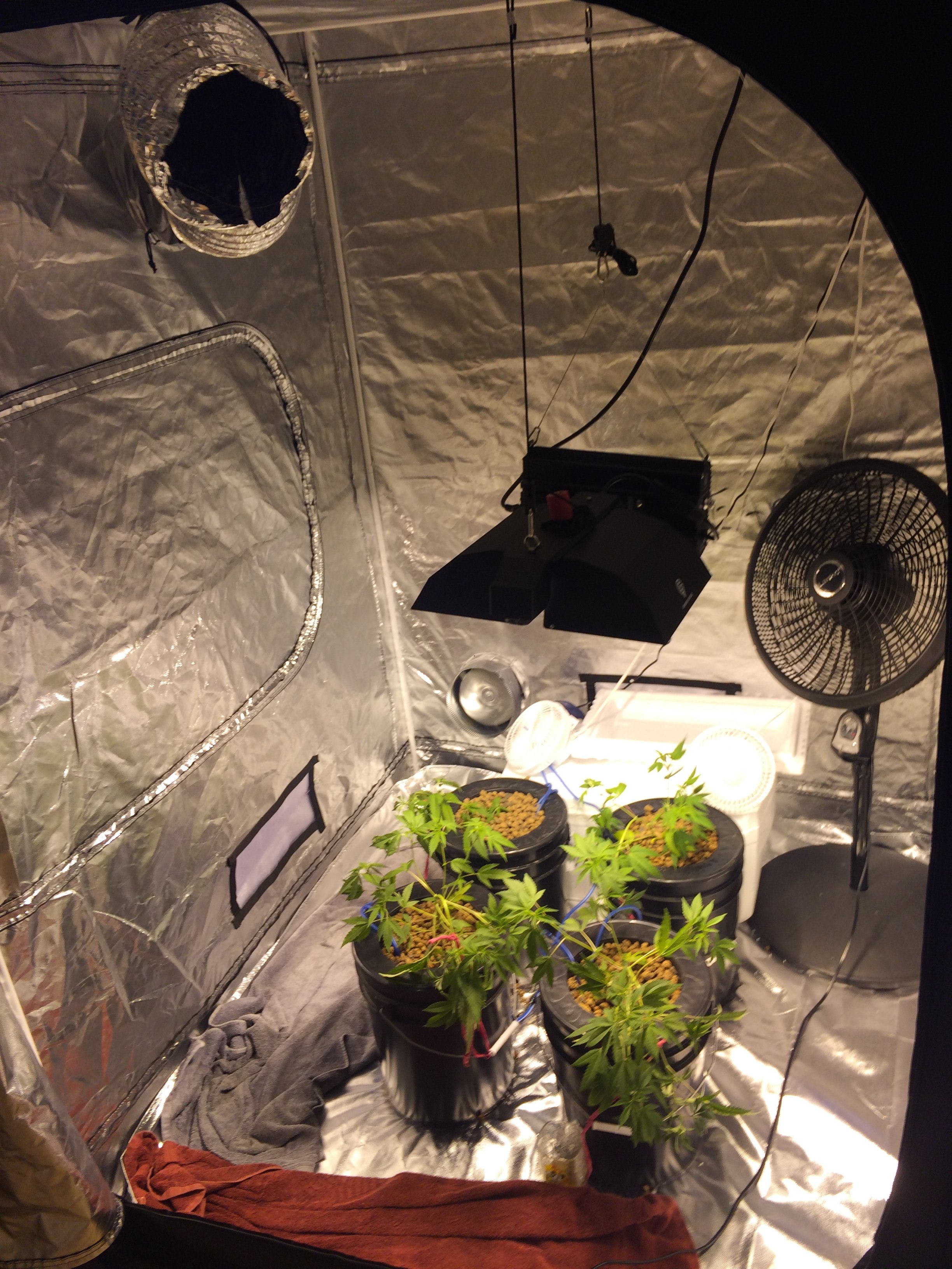 5x5 Grow 4 OG clones  DE MH/HPS 1000w | Grasscity Forums