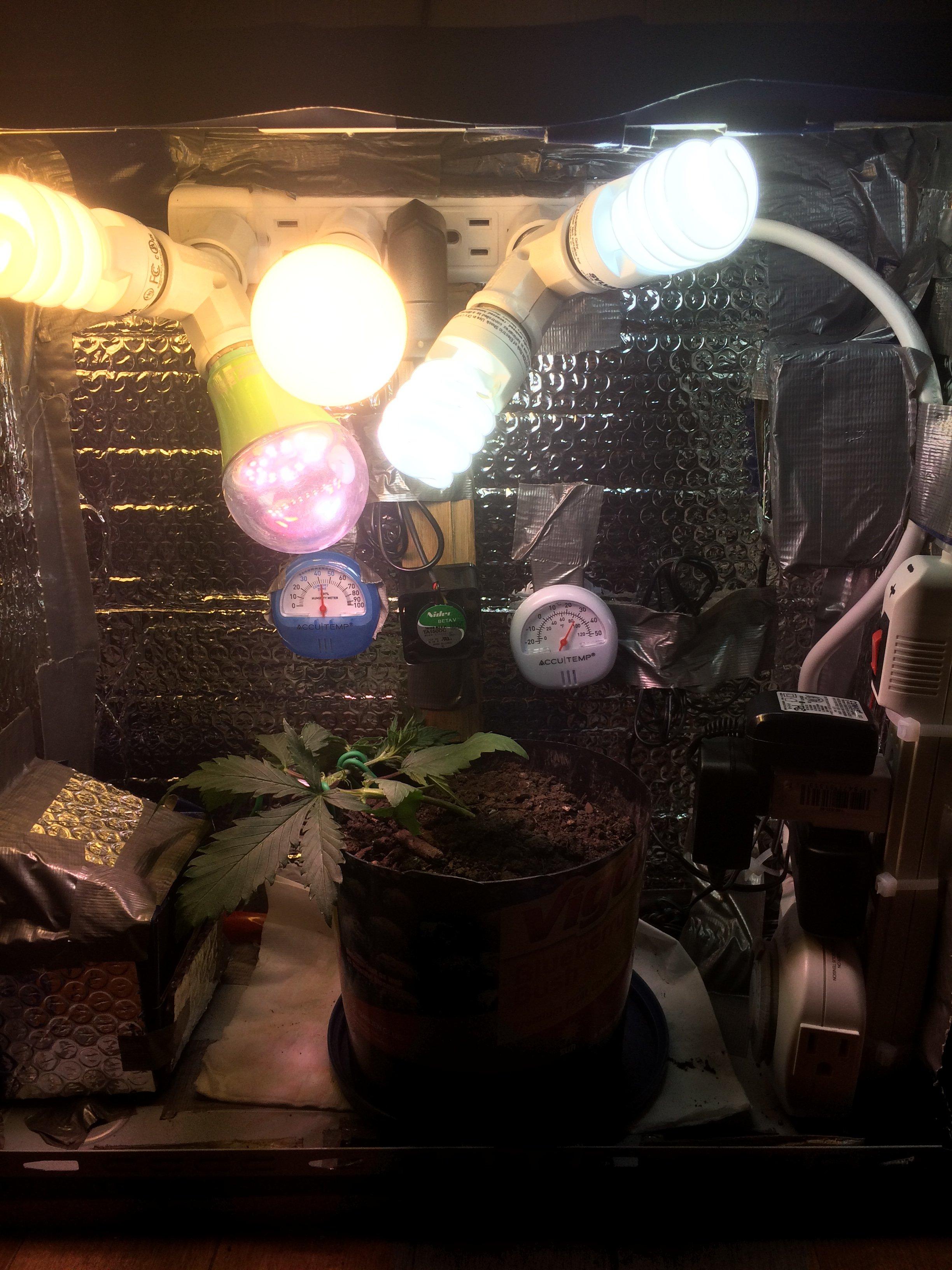 Grow Room Setup: Grasscity Forums - The #1