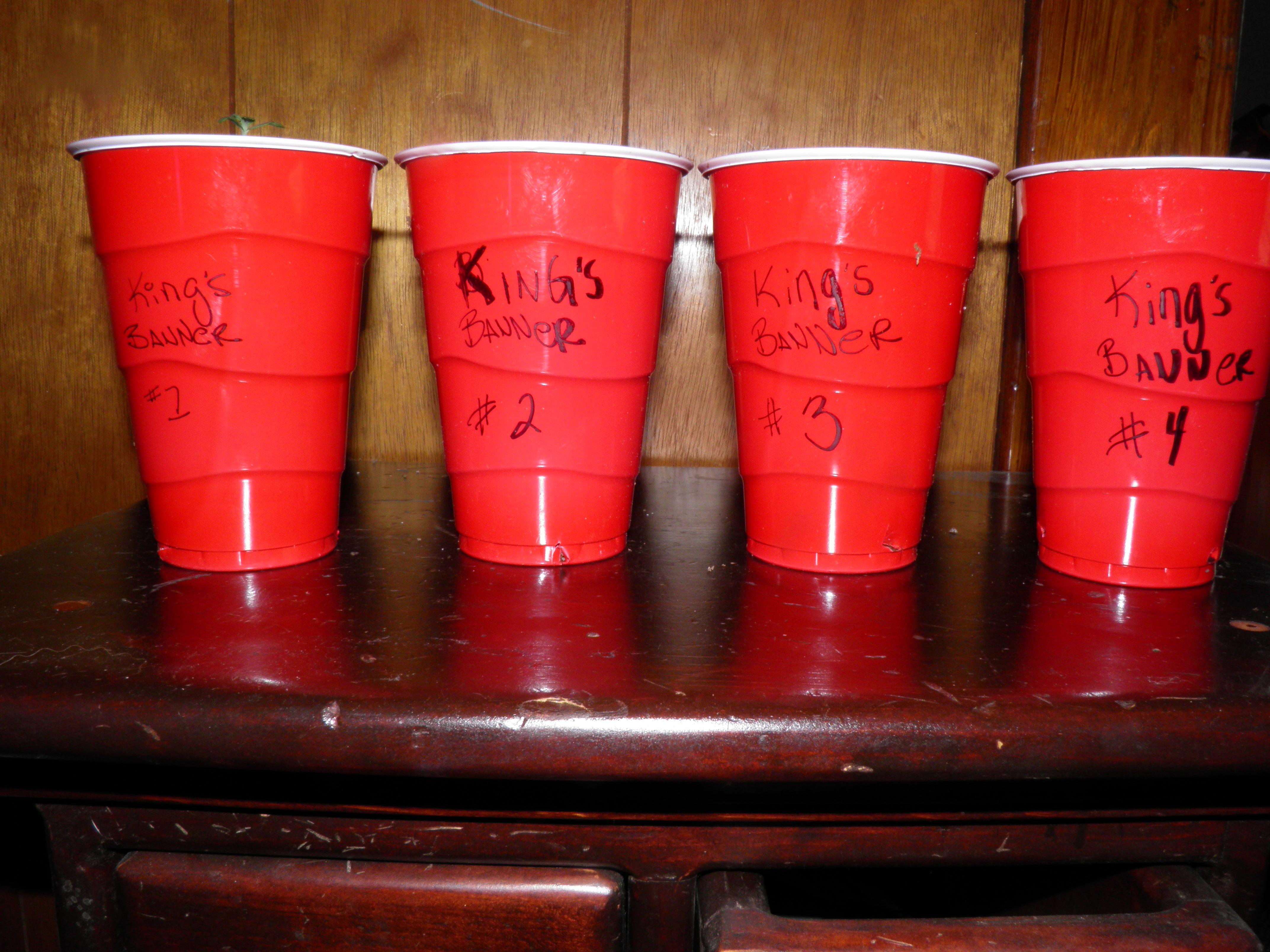kingsb.cups..JPG