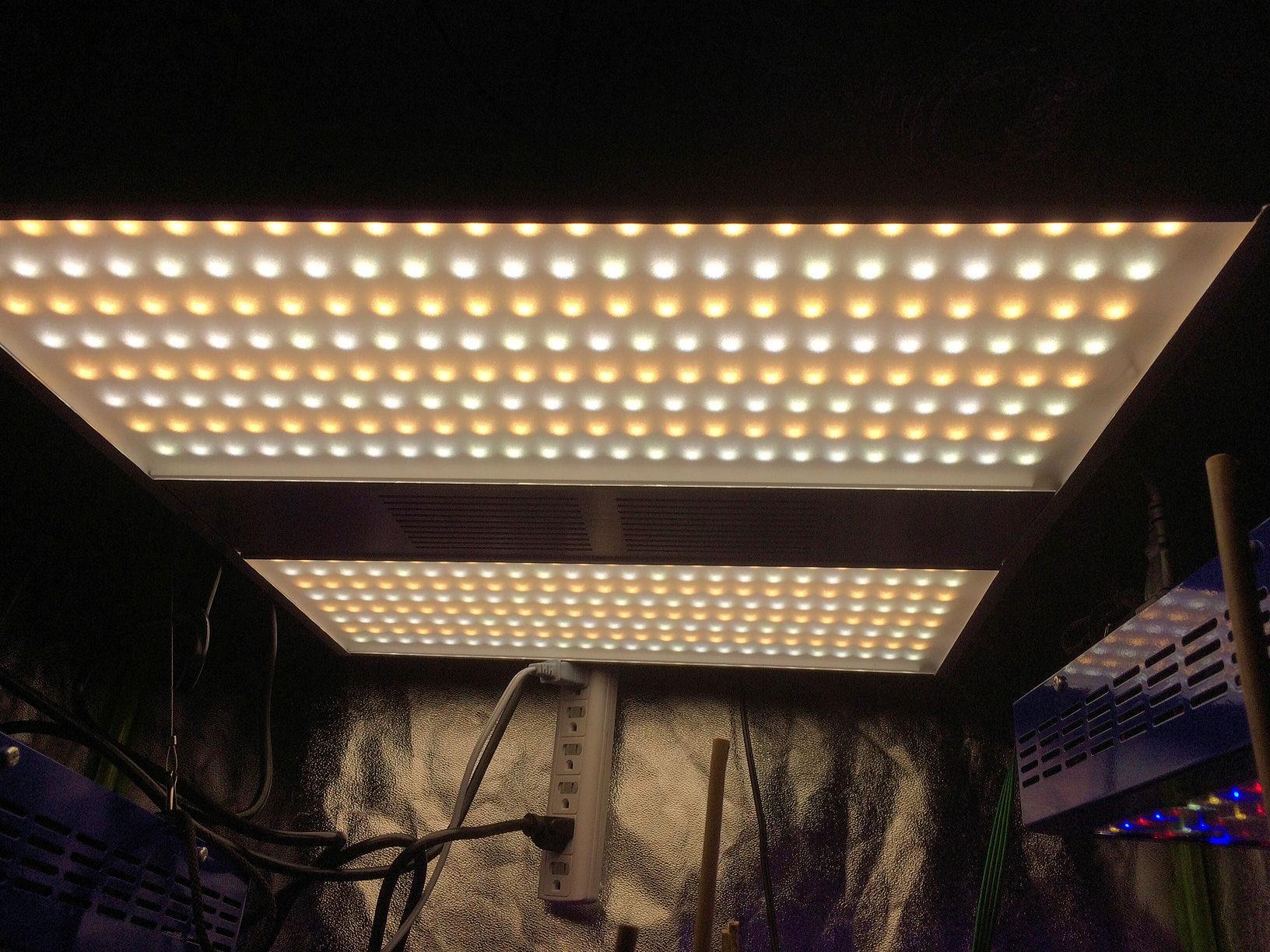 Light 5.jpg