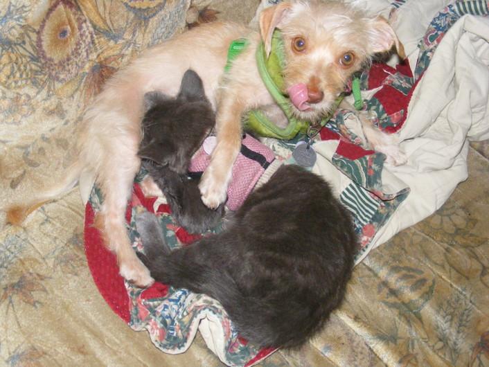 nursing.kitten.4.JPG