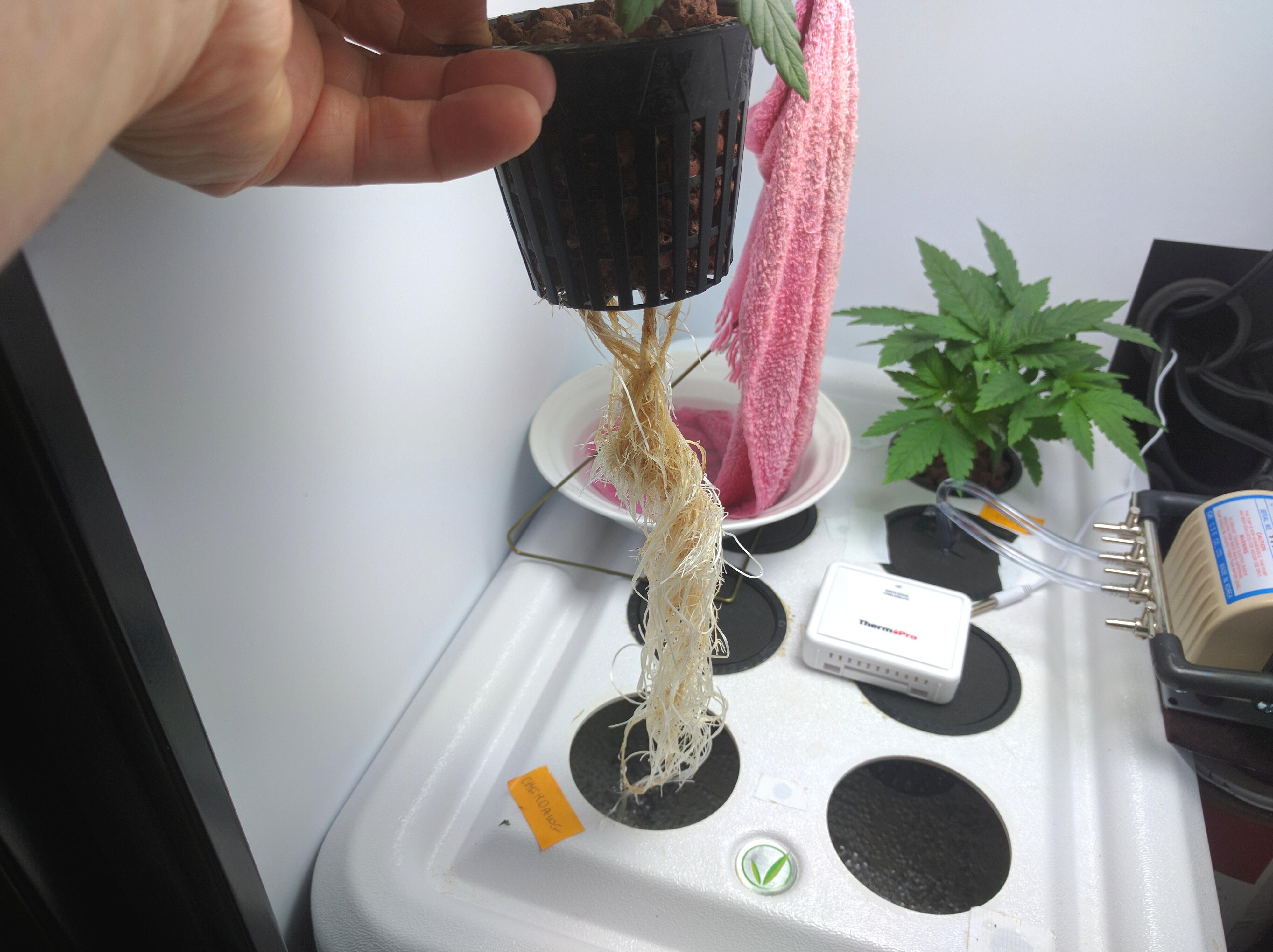 Roots 1.jpg