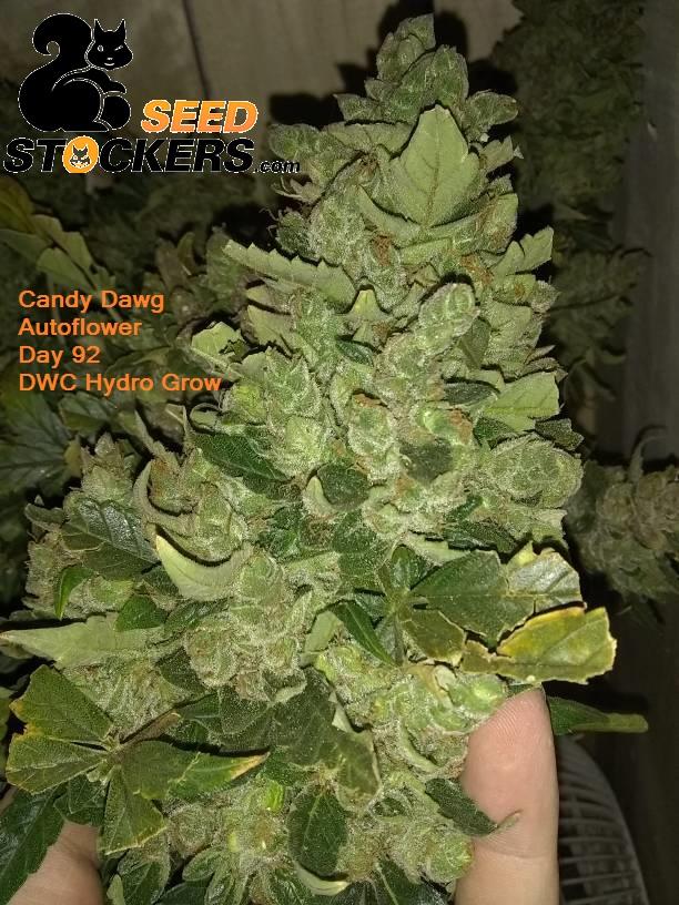 seed stockers.jpg