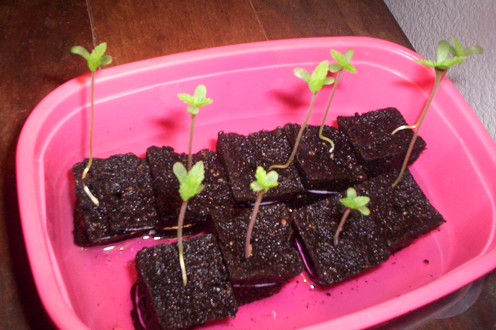 sprouts on third day 002.JPG
