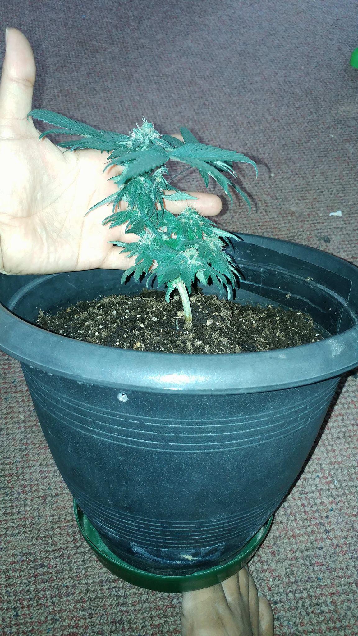 weed13weeks2.jpg