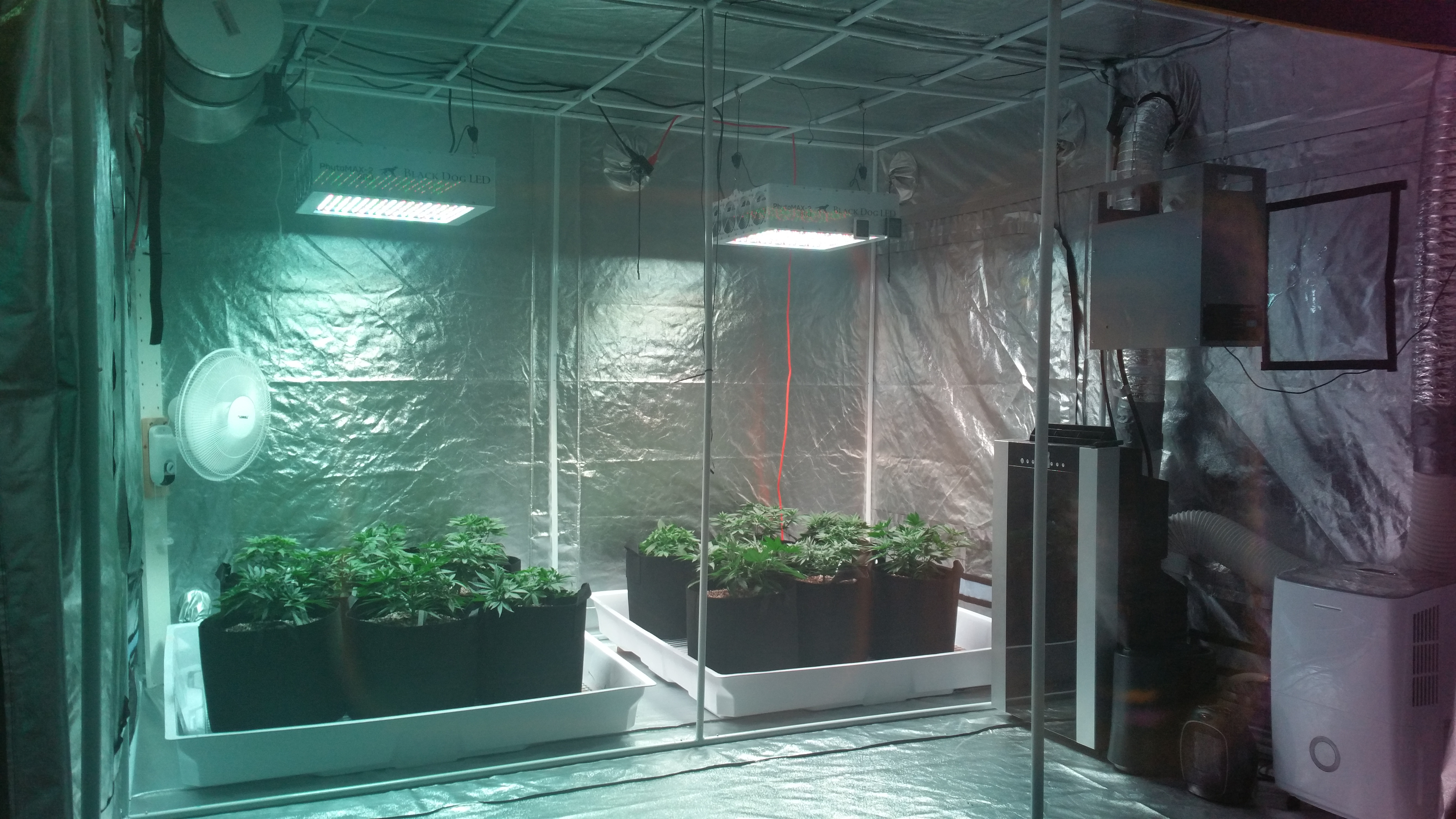 Air conditioner 2 humidifiers dehumidifier heater CO2 burner & Black dog LED grow--Harvest is in final yield results on page 61 ...